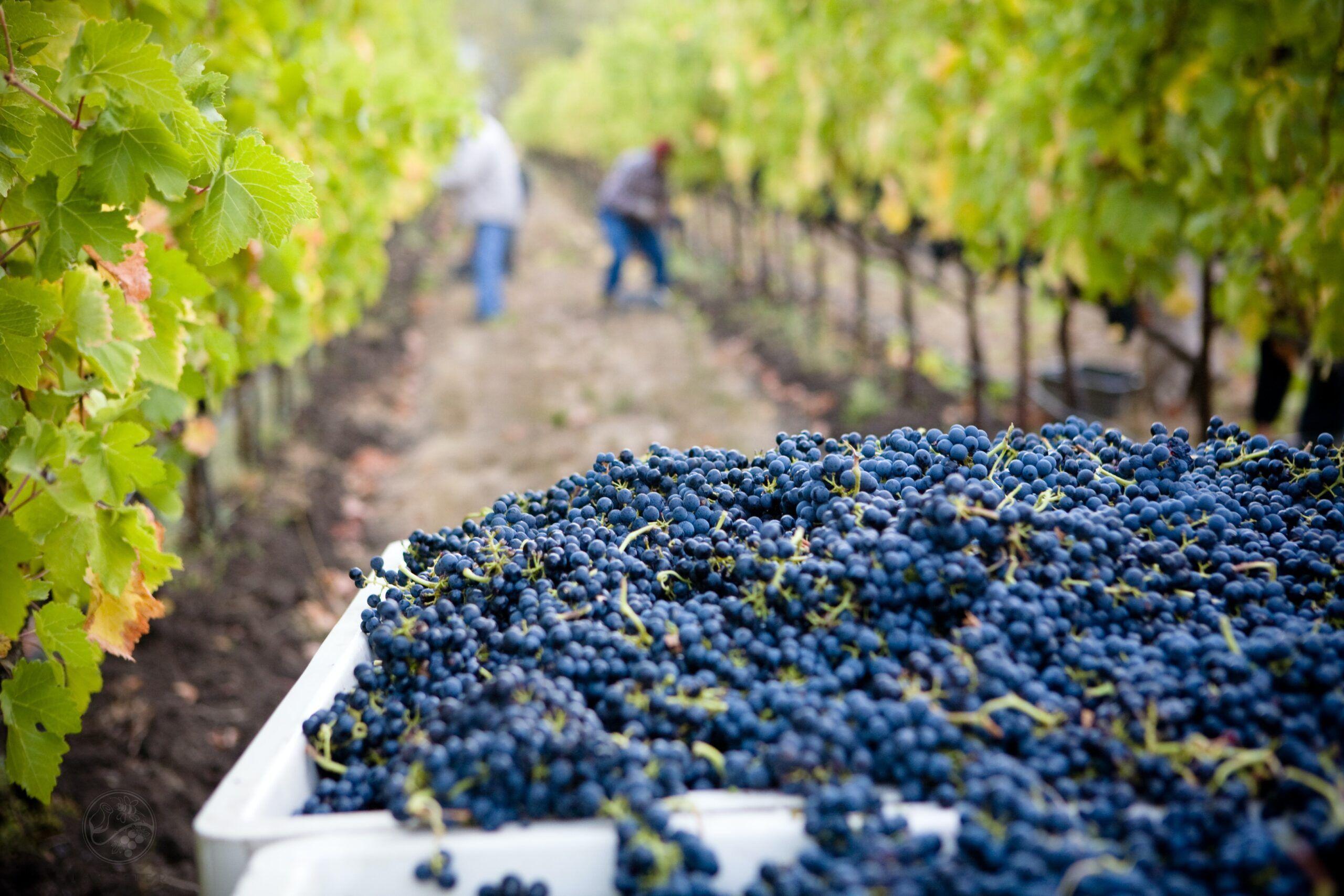 Diccionario del vino: añada