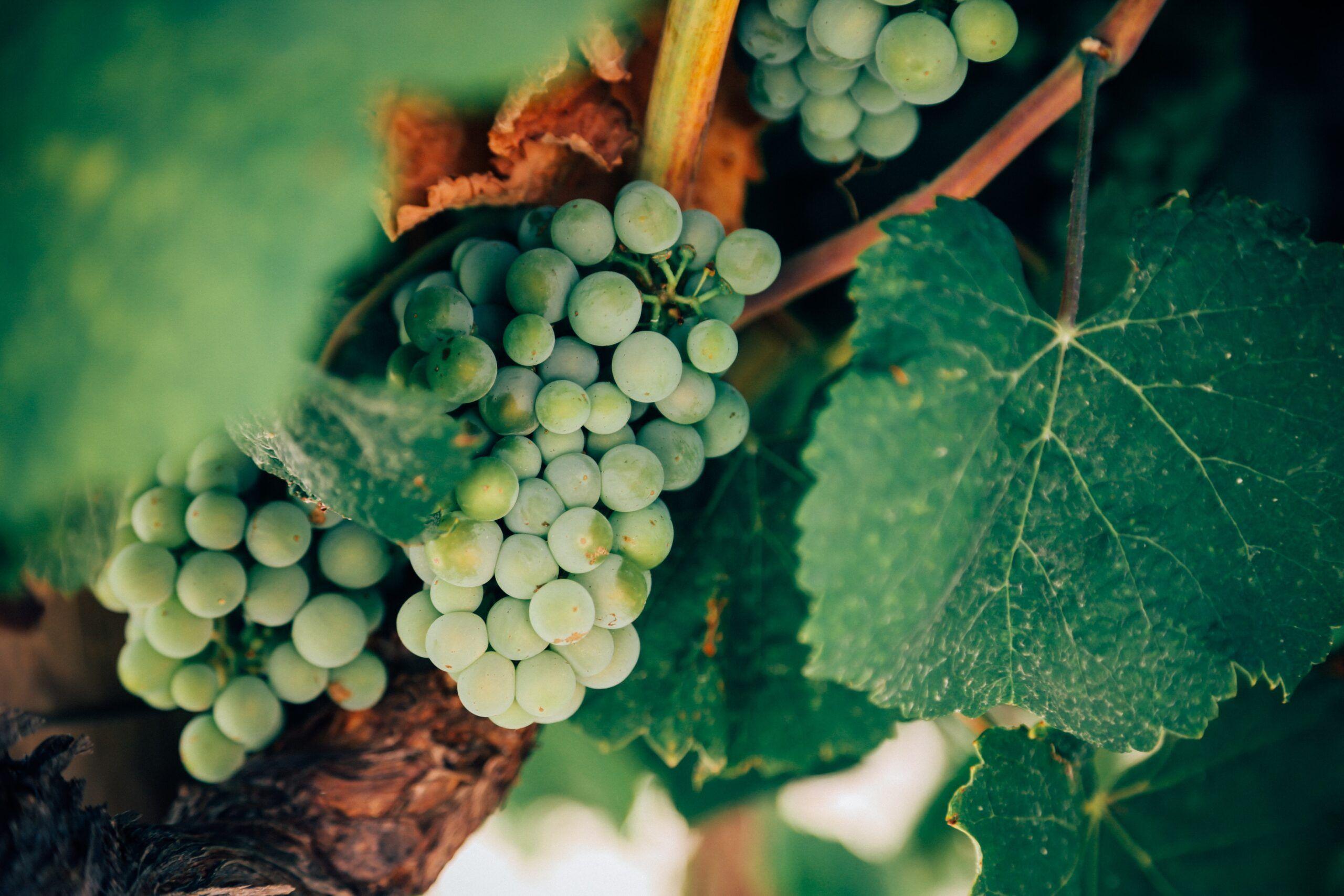 Qué es un vino de pago o vino de la tierra